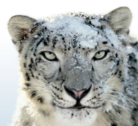 Confirmed: $29 Snow Leopard Installs Whether or Not You've